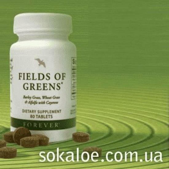 Зеленые поля_1